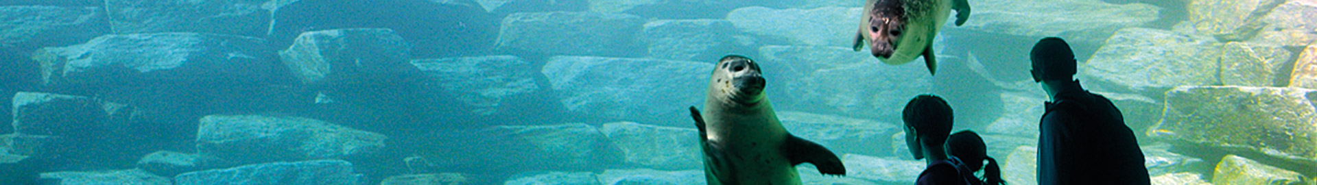 The most beautiful zoos and animal parks in Brittany