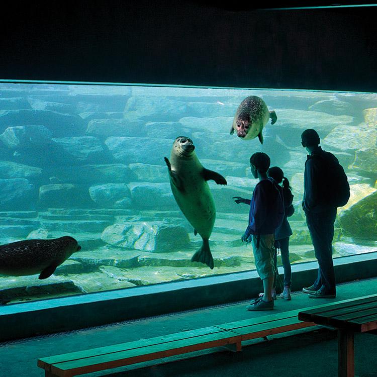 Les plus beaux zoos et parcs animaliers en Bretagne