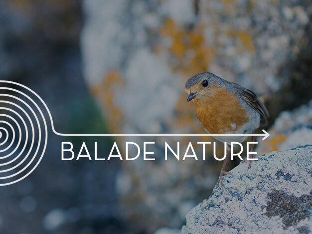 Journée mondiale des zones humides : oiseaux d'eau